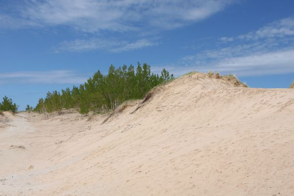 pure-michigan-sand-dunes